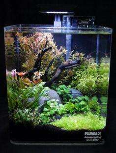 aquascaping in this small fish tank! fish tank ideas Lovely aquascaping in this small fish tankYou can fin. Betta Aquarium, Tropical Fish Aquarium, Tropical Fish Tanks, Live Aquarium Plants, Betta Fish Tank, Nature Aquarium, Planted Aquarium, Plant Fish Tank, Planted Betta Tank