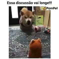 ・・・ The doggo has a point .You can find Dog memes and more on our website. ・・・ The doggo has a point . Cute Memes, Funny Cute, Funny Memes, Jung So Min, Love Dogs, Puppy Love, Funny Animals, Cute Animals, Smiling Dogs