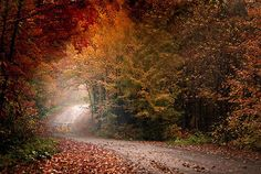 beautiful fall drive