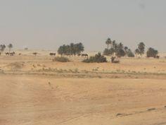 Michela, Redaktionsassistentin, war in # Djerba, #Tunesien. Destinations, Camping, Vintage World Maps, Around The Worlds, Painting, Board, Travel Destinations, Campsite, Painting Art