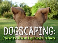 While dogs and backyards go hand-in-hand (or is it paw-in-paw?), having a fun-loving dog and a perfectly manicured lawn or garden is just a dream for many dog moms and dads. Let's face it - dogs dig; they...