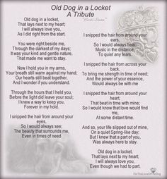 For all my beloved furbabies who are at the Rainbow Bridge waiting for me. I Love Dogs, Puppy Love, Love You, Dog Quotes, Animal Quotes, Qoutes, Pet Poems, Pet Loss Grief, Boston Terrier