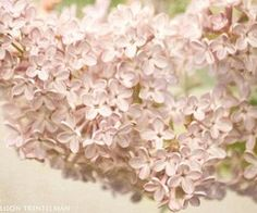 Search Springtime images