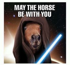 May The Horse Be With you