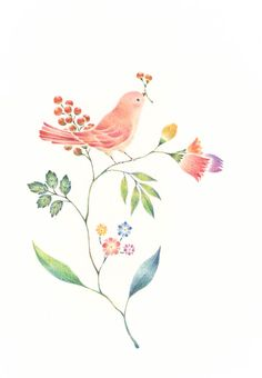 """Little Pink Bird and Flowers"" −RiLi, picture book, illustration, design ___ ""桃色の小鳥と草花"" −リリ, 絵本, イラスト, デザイン ...... #bird #flower #鳥 #花"