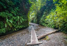 Most Beautiful Places to Visit in California: Road Trip Ideas - Thrillist Fern Canyon, Gold Bluffs Beach, CA Beautiful Places In California, Beautiful Places To Visit, Most Beautiful, Alamere Falls, Places To Travel, Places To See, Travel Destinations, Natural Bridge, California Travel