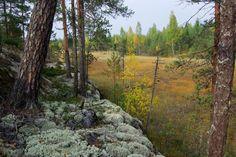 Ympäristöministeri Kimmo Tiilikaisen (kesk.) kotiseutu, Etelä-Karjala, on Suomen metsiensuojelun ja yleensäkin luonnonsuojelun pahnanpohjimmainen murheenkryyni. Suomen ympäristökeskuksen tilastojen mukaan maakunnassa on suojeltu vain alle kaksi prosenttia metsämaasta.