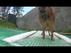 Diy Dog Pool Ramp Http Www Make And Build Dog Stuff Com
