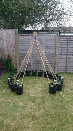 Garden Ideas To Make, Cheap Garden Ideas, Design Jardin, Veg Garden, Balcony Garden, Easy Garden, Garden Art, Vegetable Gardening, Organic Gardening