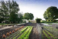 Jason Ingram - Photography portfolio of gardens - Le Manoir Spring. A Bristol based Photographer specialising in Gardens, Food, People and Interiors. Veg Garden, Edible Garden, Home And Garden, Vegetable Gardening, Organic Gardening, Gardening Tips, Landscape Design, Garden Design, Garden Cloche