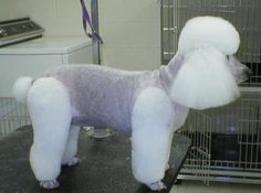 Different Styles Poodle Grooming | Groomers BBS » Breed Styles and Grooming Techniques » POODLES ...