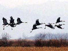 """""""На Востоке существует поверье, что птицы не умеют грустить, так как награждены вечной свободой. Когда они в чем-то разочаровываются, то надолго улетают в небо. Чем выше, тем лучше. Летят с уверенностью в том, что под порывами ветра высохнут слёзы, а стремительный полет приблизит их к новому счастью. Люди могут многому научиться у птиц. Люди должны научиться взлетать, даже если крылья сломаны. Надо всего лишь захотеть оторваться от земли, воспарить навстречу самому себе"""" - Эльчин Сафарли"""