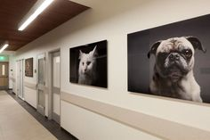 Love the wall art - simple and dramatic Shelter Dogs, Animal Shelter, Pet Shop, Cat Hotel, Shelter Design, Pet Boarding, Pet Resort, Pet Clinic, Hospital Design