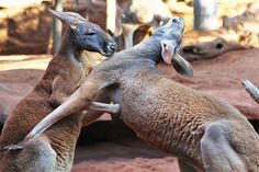 18 Incredible Photos – ANIMALS FIGHTING for their LIFE