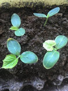 Succulents, Plants, Succulent Plants, Plant, Planting, Planets
