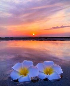 Love Wallpaper For Mobile, Beach Wallpaper, Nature Pictures, Cool Pictures, Beautiful Pictures, Dreamy Photography, Nature Photography, Lotus Flower Art, Beautiful Flowers Wallpapers