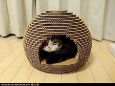 All you need is cardboard, a utility knife, and a way to draw your cat away from the cardboard that you'll transform into an architectural masterpiece.
