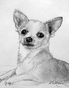 Teacup Chihuahua Drawing