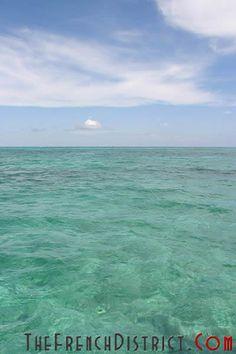 Une merveille de la nature pour les adeptes du masque et du tuba. Fierté de l'ile de Key Largo, le John Pennekamp abrite plus de 610 espèces de poissons Cray Cray, State Parks, Beach, Water, Outdoor, Key Largo, Natural Wonders, Florida, Park