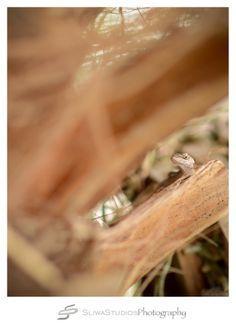 Orlando Photographer| Florida Landscape Photography| Sliwa Studios Photography| Lizard