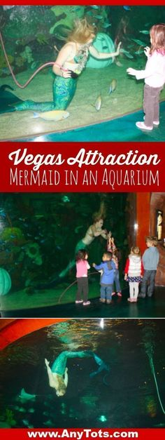 Free Kids Attraction in Vegas: Mermaids' Swimming & Stingray Feedings – Any Tots – Unique Baby Bathing Las Vegas Hotel Deals, Las Vegas Attractions, Kids Attractions, Las Vegas Vacation, Las Vegas Restaurants, Casino Hotel, Vacation Ideas, Us Travel Destinations, Travel Tips