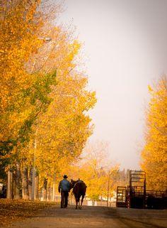 golden poplars, team work