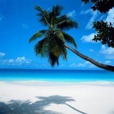 Sarasota Siesta Key, Florida. Whitest, softest sand I've dug my toes in. kgalindo