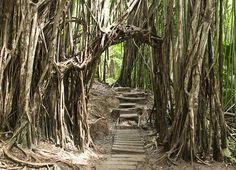 Manoa Falls Trail | Here's tips for finding and hiking the t… | Flickr