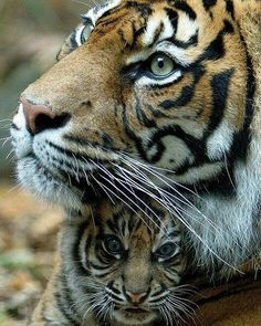 My favorite  Follow @wildlifeplanet for more amazing nature and animals photos @wildlifeplanet  #Wildgeography