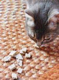 Friandises pour chat faites maison