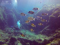 http://aquamatic.pl/wyjazdy/malta  Takie widoki na Malcie, Gozo pod wodą zapiera dech w piersiach. Nurkowanie w pięknych, czystych i przejrzystych wodach Morza Śródziemnego!  Polecamy wyjazdy nurkowe na Maltę z Aquamatic.pl! :)