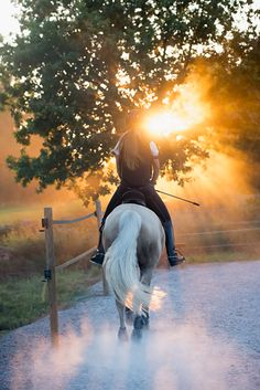 September 12, Wow. This shot is just perfect in every aspect. The pristine setting and the gentle colors dominated by the soft sun-rays simply enthralls us. Where do we sign up for riding lessons? Photographer: Caluvafoto, ima121195. http:/www.johner.com