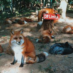 Дороги нет. Осторожно! Впереди Толстенькие лисы!