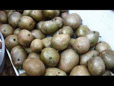 Супер ранний картофель. Технология - YouTube