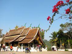 Wat Xieng Thong y el árbol de flores rojas