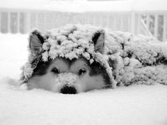 21 Pics of Puppies Playing in Snow So Cute, They'll Warm Your Heart