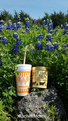 Everything a Texan needs--bluebonnets, Blue Bell ice cream and Whataburger! Texas Humor, Texas Funny, Only In Texas, Republic Of Texas, Texas Forever, Loving Texas, Texas Bluebonnets, Texas Pride, Texas History