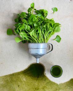 #greenjuice made from miner's lettuce, spinach, lime, apple juice and ginger + it's working like a natural paint  tegnapi biopiac szerzeményem, a téli porcsin zöld juice alakjában, spenóttal, lime-mal, gyömbérrel és almalével, természetes festékként is elég jó  #organicmarket #veggies #vegeveryday #greenliving #greens #greensmoothie #juice #healthyfood #superfood #greenfood #vegan #foodart #foodartist #aquarell #foodphotography #foodphotographer #foodstylist #foodstyling #f52grams #he...