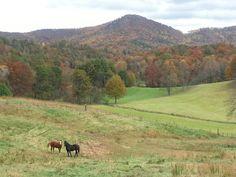Autumn Ridge Farm, Hiawassee Ga.