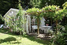 Pergola with wisteria