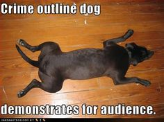 Page 1422 of 1490 - Funny pictures and memes of dogs doing and implying things. If you thought you couldn't possible love dogs anymore, this might prove you wrong. Meds For Dogs, Dog Meds, Funny Dog Pictures, Cat Memes, Funny Dogs, Hot Dogs, Outline, Crime, Funny Quotes