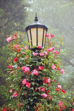 Garden lamppost covered with Roses ( My Secret Garden)
