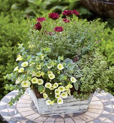 Tabletop Planter Ideas: These tabletop planters may be small, but their colorful flowers and foliage can make a big impact on your outdoor living area. Best Plants For Shade, Shade Plants, Cool Plants, Edible Flowers, Colorful Flowers, Kalanchoe Blossfeldiana, Bellis Perennis, Globe Amaranth, Early Spring Flowers