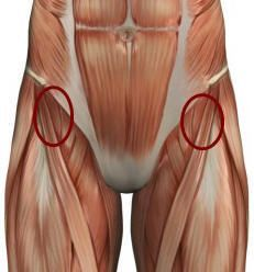 """So here we are, three entries deep into the """"It's All in the Hips"""" saga. We've covered gluteus medius and its role in stability. We've also talked about th"""