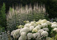 Sissinghurst...hydrangea in foreground