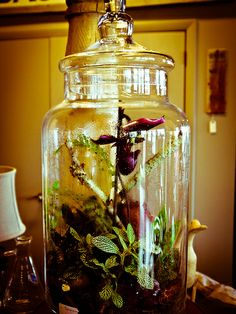 For terrariums and decor, visit us at www.facebook.com/shopbloomdesigns