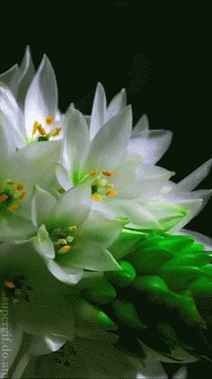 The perfect Blooming Flower Nature Animated GIF for your conversation. Discover and Share the best GIFs on Tenor. Flowers Gif, All Flowers, My Flower, Pretty Flowers, Flower Power, Beautiful Flowers Pictures, Beautiful Gif, Flower Pictures, Amazing Flowers