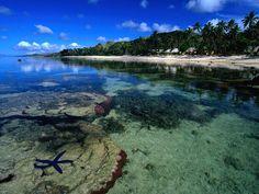 Starfish Along The Coral Coast Of Viti Levu Fiji