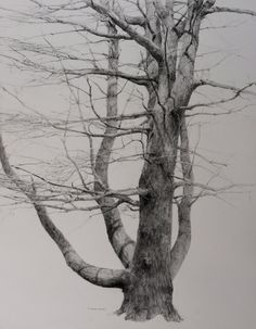 drawing of a tree
