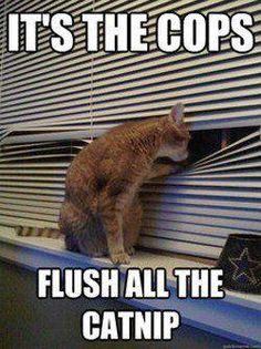 It's the cops!  Flush the catnip! #cats #funny